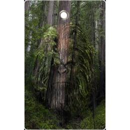 Bigfoot Hunting Tag