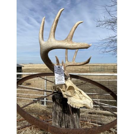 Carcass Tag, deer tag
