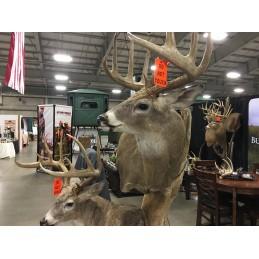 Oklahoma Hunting & Fishing