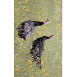Turkey Hunting Tag