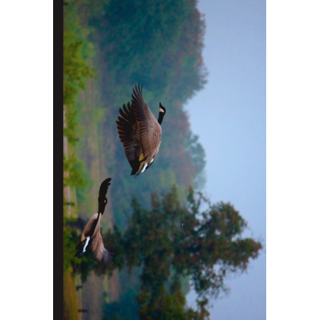 Geese Hunting Tag