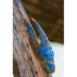 Blue Claw Wildlife Tag