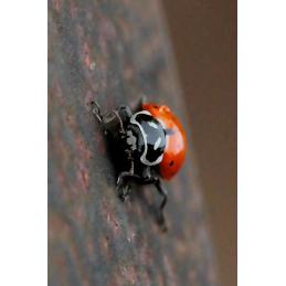 Lady Bug Hunt Tag