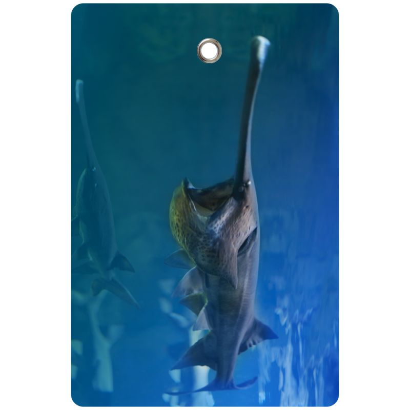 Paddlefish Tag